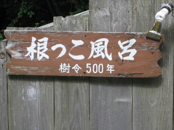 shintakayu013